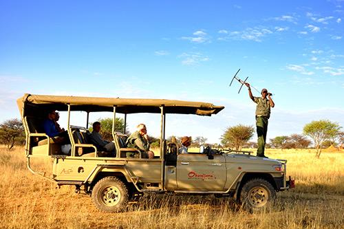 tracking leopard and hyena in the Okonjima Nature reserve whilst on safarijima