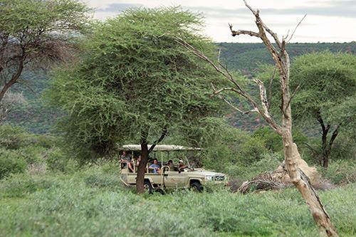 Okonjima safari drives